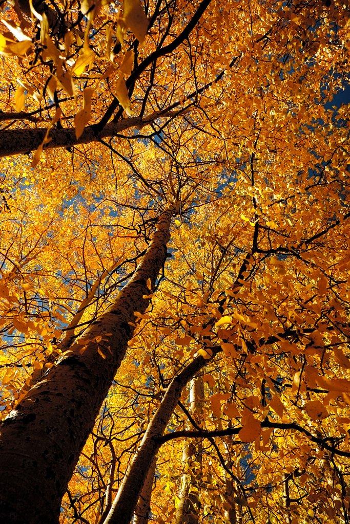 Eastern-Sierra-October-2014-20141009-190510-0361-1098.jpg